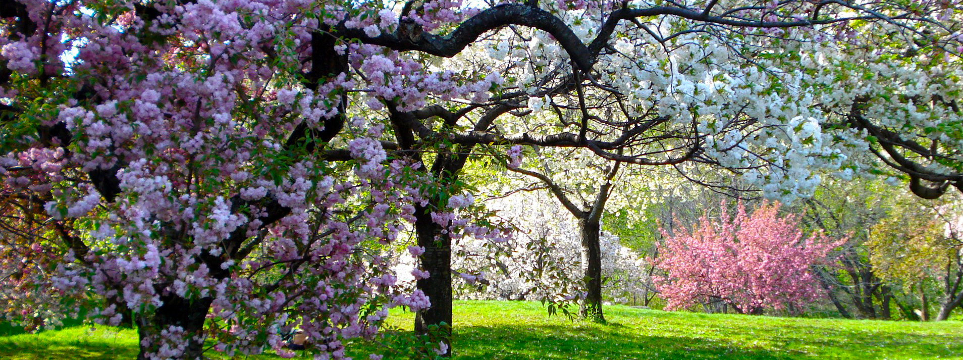 Locations irt photography - New york botanical garden parking ...