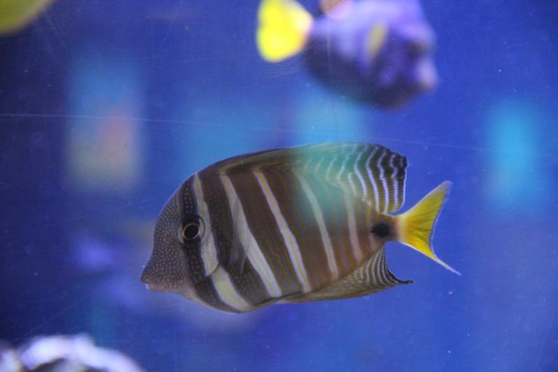 akvariym 054