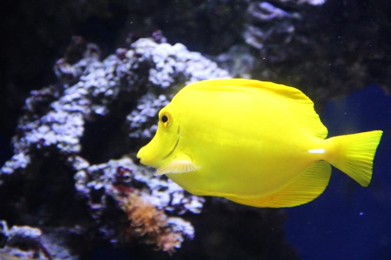 akvariym 059