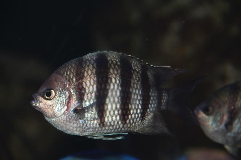 akvariym 087
