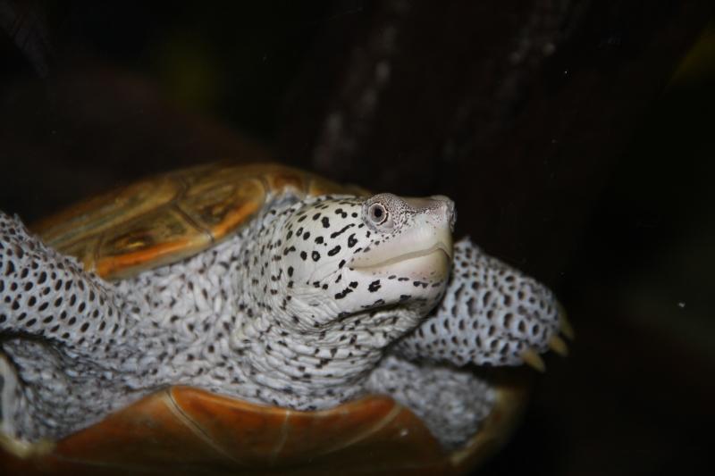akvariym 141