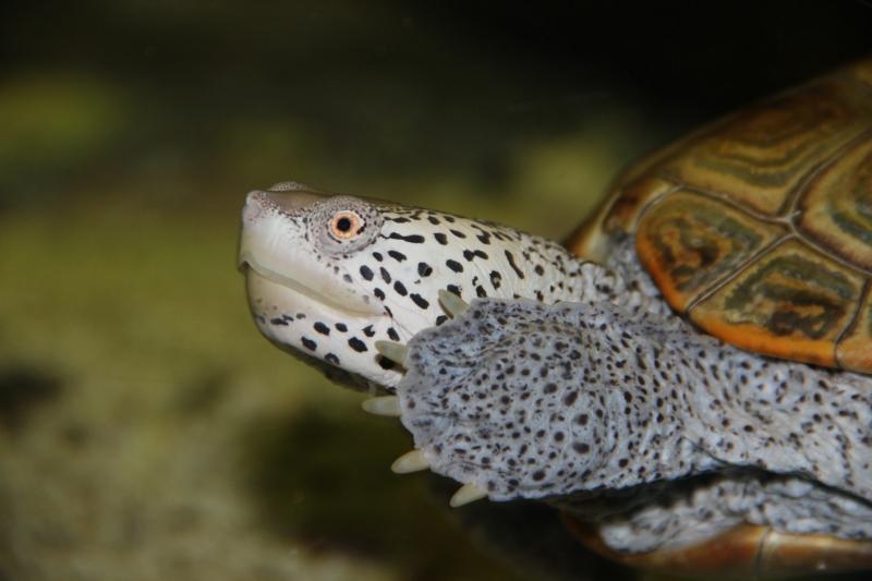 akvariym 143